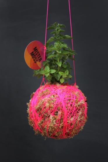 Mister-Moss-Oregano-Pink